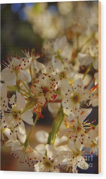 Faded Blossom Wood Print