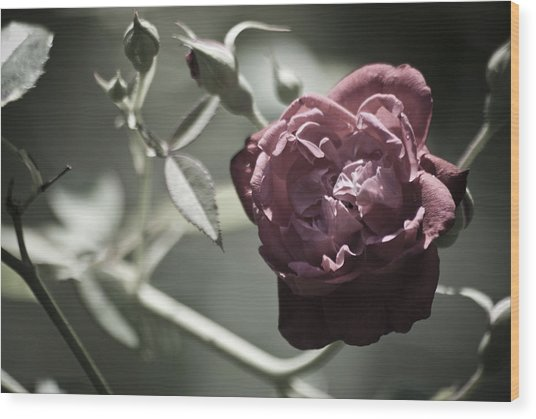 Faded Flower Wood Print