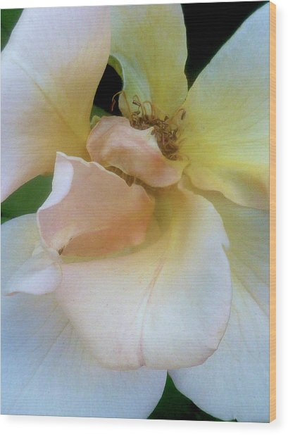 Fading Blossom Wood Print