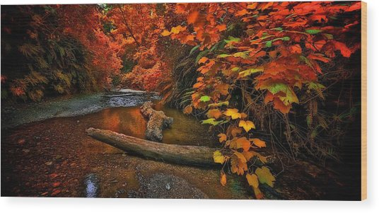 Fall Along The Creek Wood Print