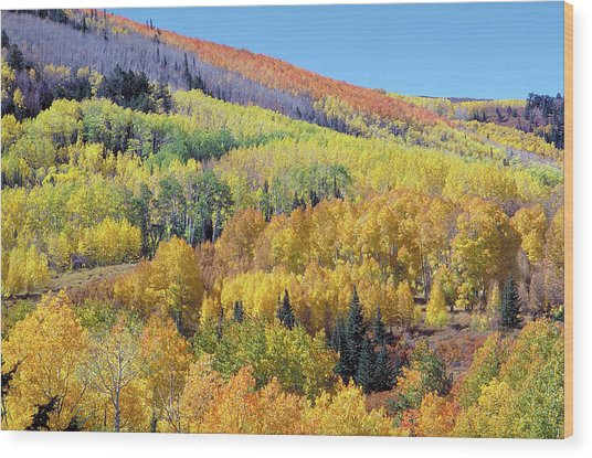 Fall Color Aspen Near Dolores Colorado Wood Print