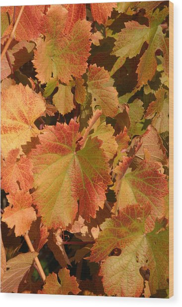 Fall Colors Wood Print by Diane Bohna