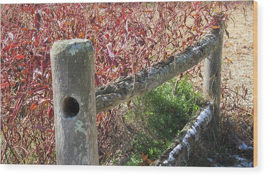 Fall Colors On The Fence Wood Print