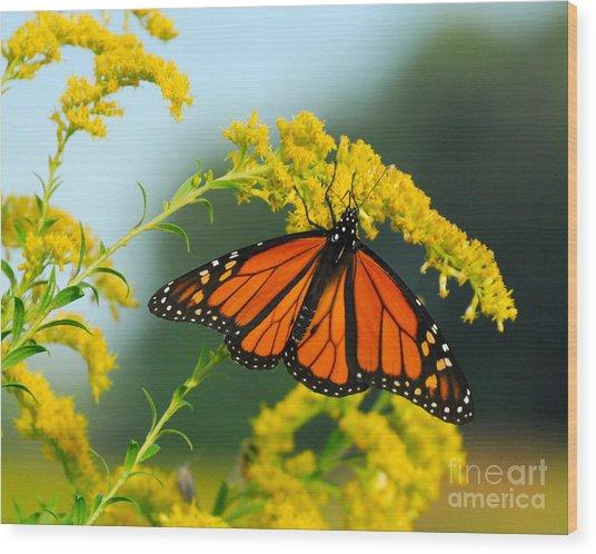 Fall Colour Wood Print