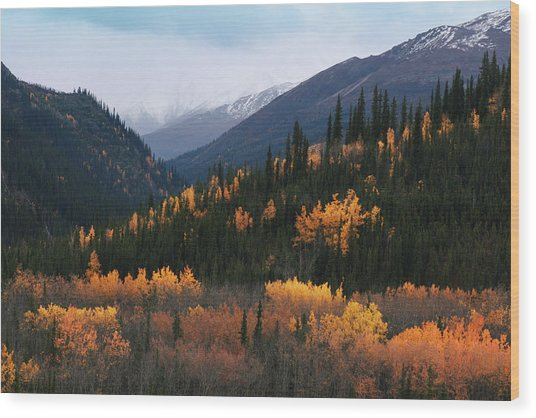 Fall Denali National Park Wood Print
