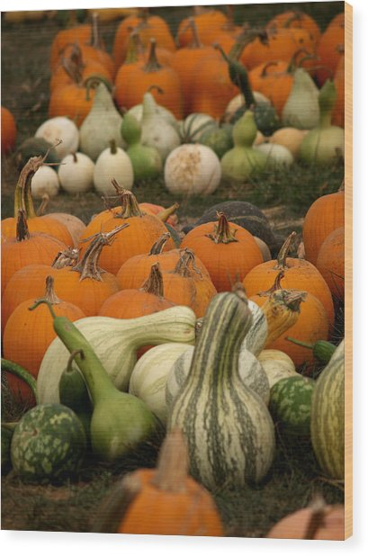 Fall Harvest Wood Print by Brenda Flynn