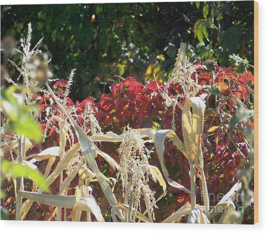 Fall Harvest Of Color Wood Print