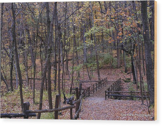 Fall In Yellowsprings Wood Print by Tina Karle