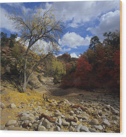 Fall In Zion High Country Wood Print