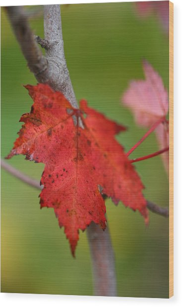 Fall Leaf Wood Print by Brady D Hebert