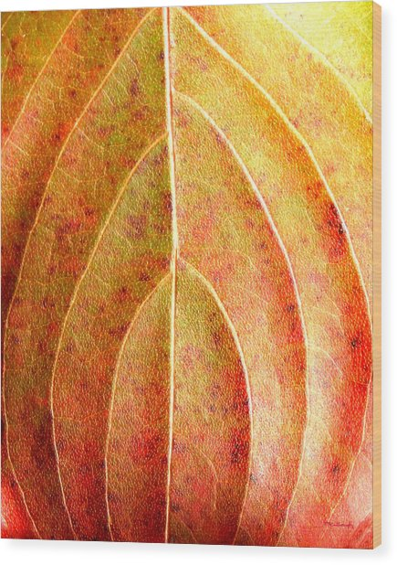 Fall Leaf Upclose Wood Print
