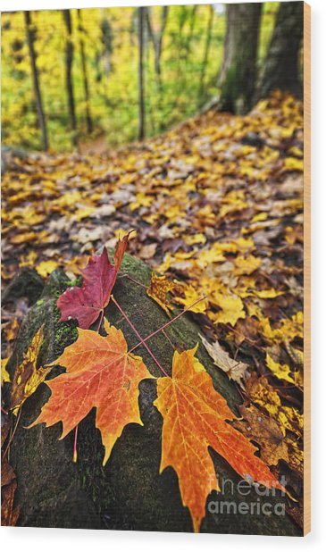 Fall Leaves In Forest Wood Print