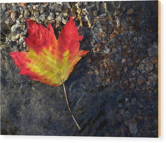 Fall Maple Leaf In Stream   Wood Print