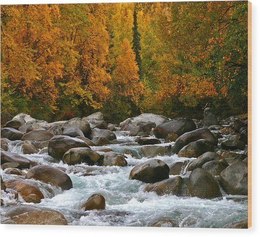 Fall On The Little Susitna River Wood Print
