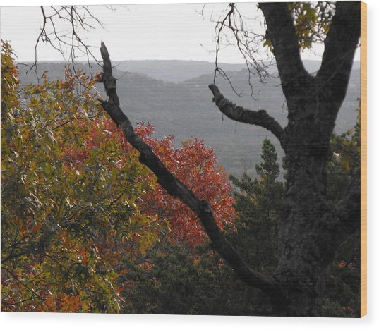 Fall Picture In Texas Wood Print by Rebecca Cearley