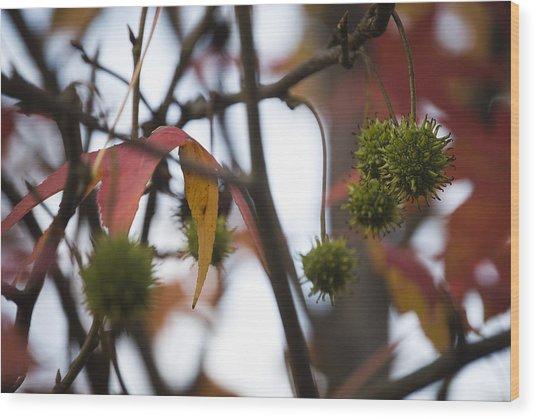Fall Seeds Wood Print