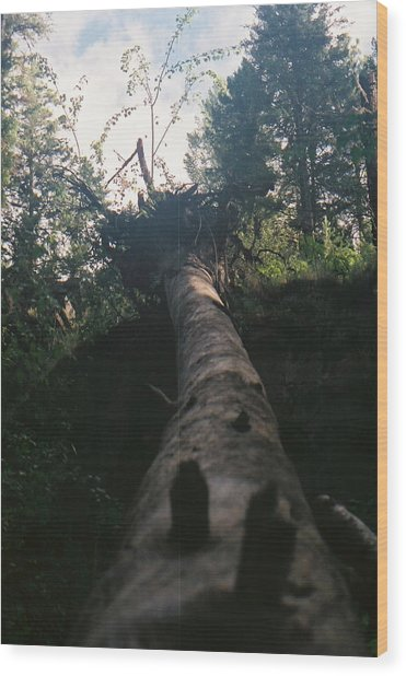 Fallen Giant Wood Print by C E McConnell