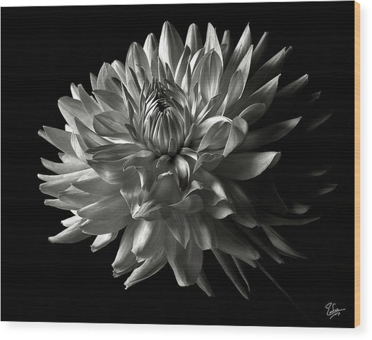 Fancy Dahlia In Black And White Wood Print
