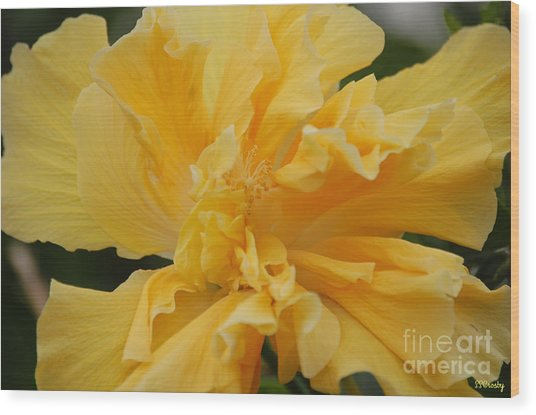 Fancy Hibiscus Wood Print