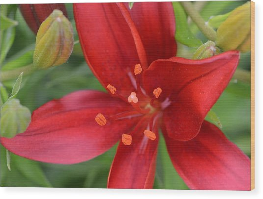 Fearless Floral Wood Print by Tanya Tanski
