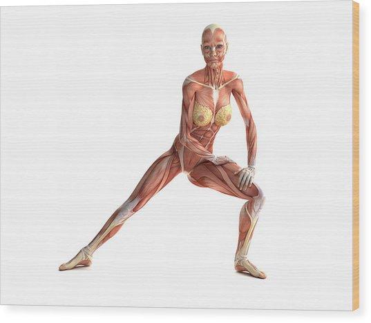 Female Muscles, Artwork Wood Print by Sciepro