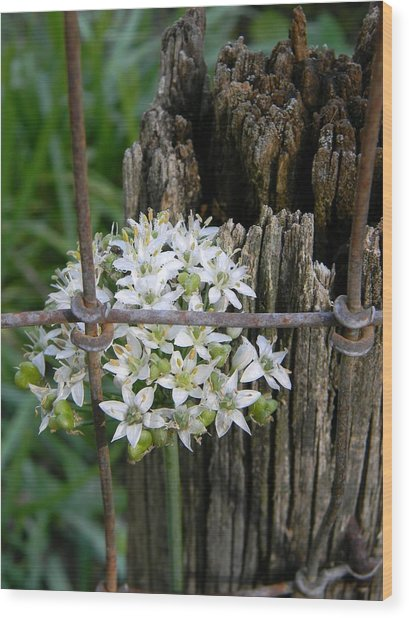Fence And Flower Wood Print by Warren Thompson