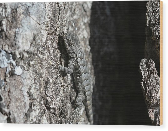 Fence Lizard Wood Print by Sean Green