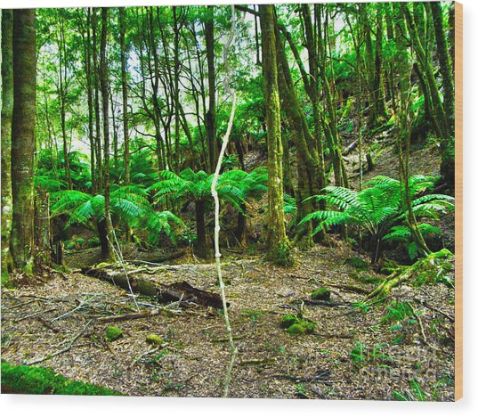 Fern Grove Wood Print by Joanne Kocwin