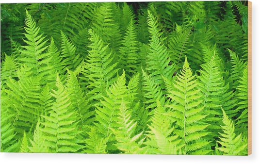 Ferns Galore Filtered Wood Print