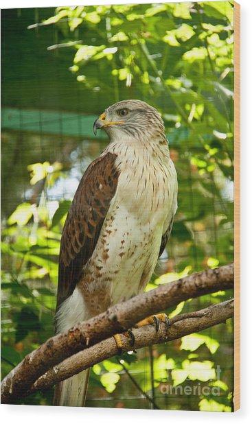 Ferruginous Hawk Wood Print by Rachel Duchesne