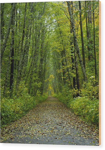 Ferry Island Wood Print