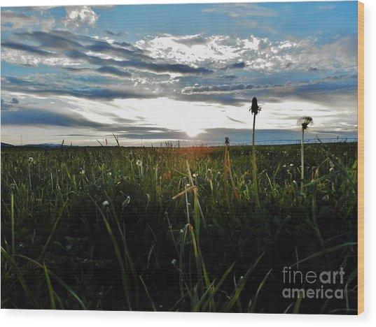 Field Of Alfalfa 5 Wood Print by Tayla Hanson