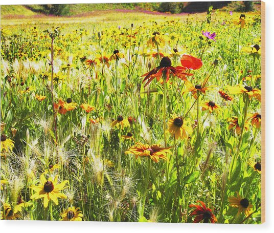 Field Of Bright Colorful Wildflowers Wood Print