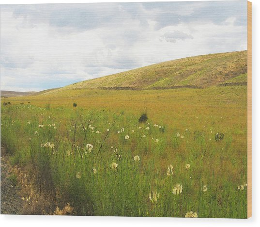 Field Of Dandelions Wood Print
