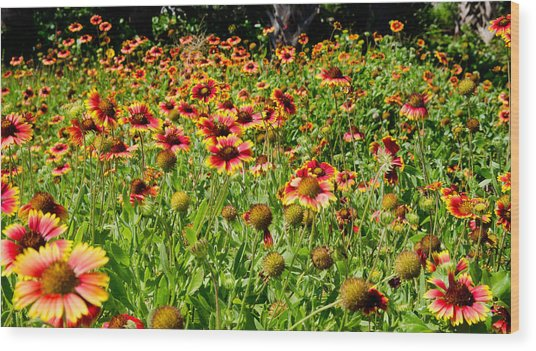 Field Of Flowers Wood Print by Mike Rivera