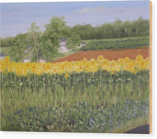Field Of Sunflowers Wood Print