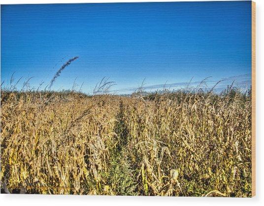 Fields Of Gold Wood Print by Dan Crosby