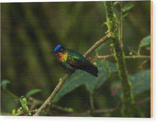 Fiery-throated Hummingbird Wood Print