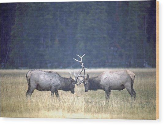 Fighting Elk Wood Print
