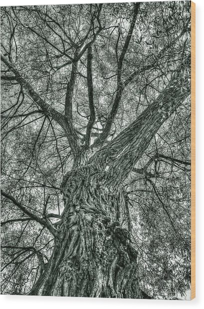Finkles Landing Tree Wood Print