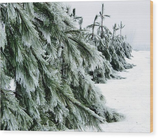 Fir And Ice Wood Print by Sophie Vigneault