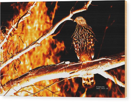 Fire Hawk 0112 Wood Print