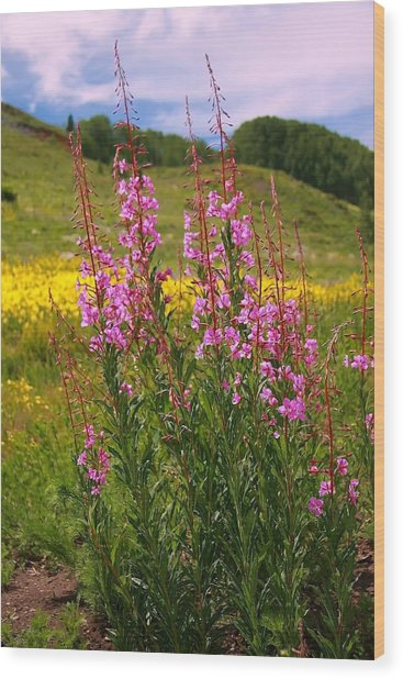 Fireweed Wood Print