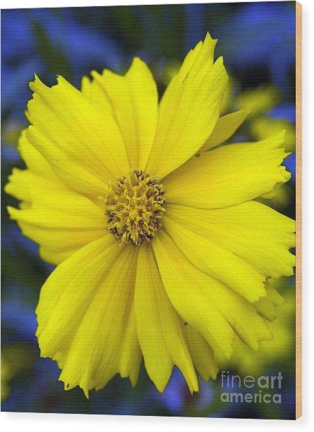 Firey Yellow Flower Wood Print
