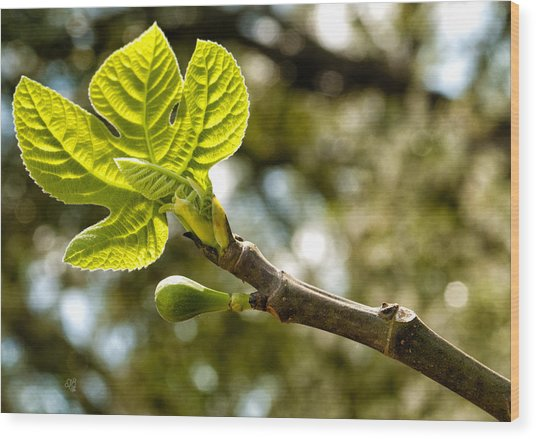 First Leaves And Fig  Wood Print