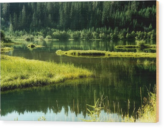 Fishing The Still Water Wood Print