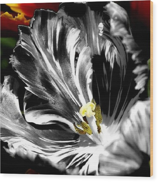 Flaming Flower 2 Wood Print by James Granberry