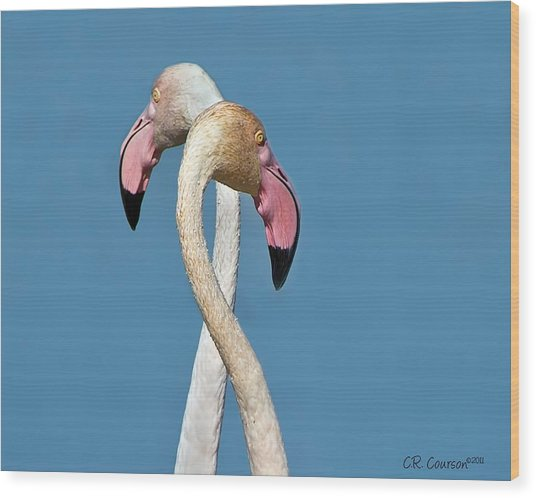 Flamingo Couple Wood Print