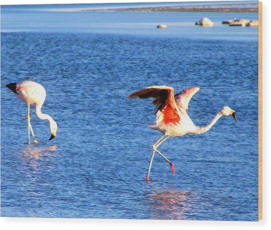 Flamingos Flamencos Wood Print