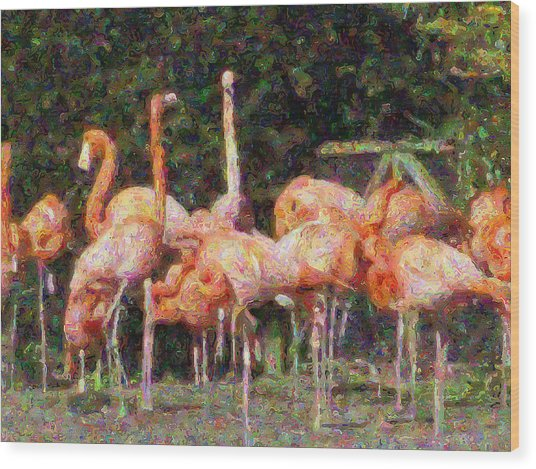 Flamingo's Wood Print by Fred Whalley